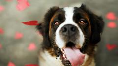 Cute Dogs 14461