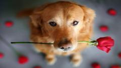 Cute Dogs 14467