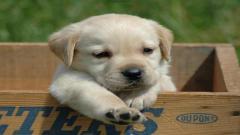 Cute Dogs 14469