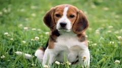 Cute Dogs 14471