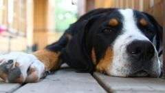 Cute Dogs 14474