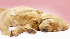 Cute Dogs Wallpaper 14458