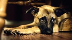 Cute Dogs Wallpaper 14462