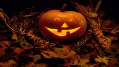 Cute Halloween Wallpaper 15761