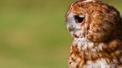Cute Owl Wallpaper 15768