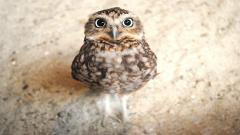 Cute Owl Wallpaper 15770