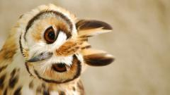 Cute Owl Wallpaper 15771