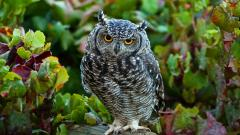 Cute Owl Wallpaper 15772