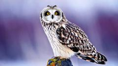 Cute Owl Wallpaper 15773