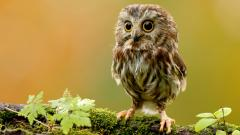 Cute Owl Wallpaper 15774
