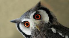 Cute Owl Wallpaper 15775