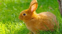Cute Rabbit 35235