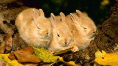 Cute Rabbit Wallpaper 35238