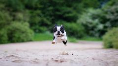 Cute Running Wallpaper 35506