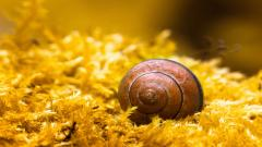 Cute Snail Wallpaper 35680