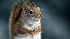 Cute Squirrel 34485