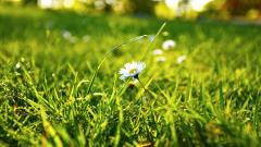 Daisy Bokeh Wallpapers 39255