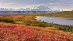 Denali National Park 31543