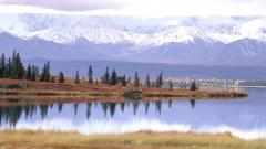 Denali National Park 31545