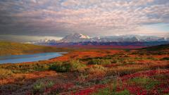 Denali National Park HD 31544