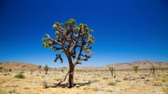 Desert Vegetation HD 32440
