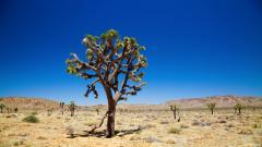Desert Vegetation HD 32440