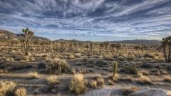 Desert Vegetation Wallpaper 32437