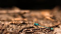 Dragonfly Background 39231