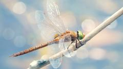 Dragonfly Wallpaper 39228