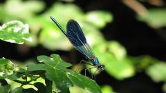 Dragonfly Wallpaper 39230