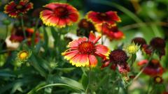 Exotic Flowers 15092