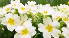 Exotic Flowers 15097