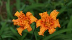 Exotic Flowers 15103