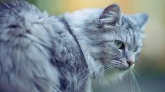 Fantastic Cat Close Up Wallpaper 39666