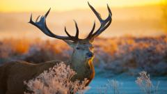Fantastic Deer Close Up Wallpaper 39660