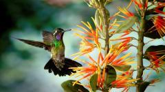 Fantastic Hummingbird Wallpaper 44028