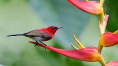 Fantastic Red Bird Wallpaper 44023