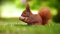 Fantastic Squirrel Wallpaper 34501