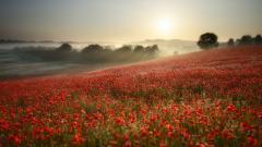 Flower Landscape 29009