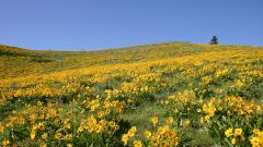 Flowers Landscape 29010
