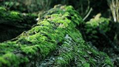 Forest Moss 34392