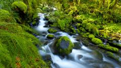 Forest Moss HD 34391