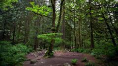 Forest Moss Wallpaper 34382