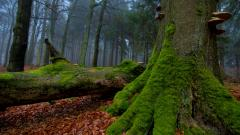 Forest Moss Wallpapers 34398