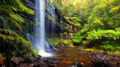 Forest Waterfall 34066