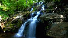 Forest Waterfall Wallpaper 34053