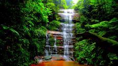 Forest Waterfall Wallpaper 34054