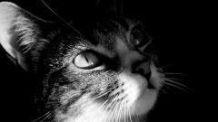 Free Cat Wallpaper 24252