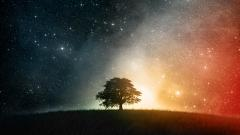 Free Cosmos Wallpaper 25111