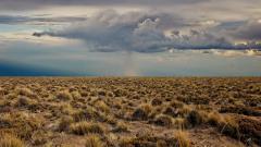 Free Desert Vegetation Wallpaper 32439